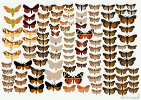 Wall of Moths by kaolincash