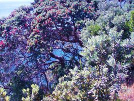 Pohutukawa tree over the ocean by goldfinch78