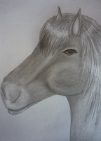 Horse Sketch by LadyNoise