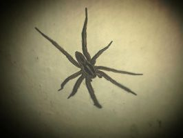 Just a spidy on the wall ... by Saint-Angerr
