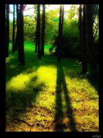 Shadow of the Nature by mityu