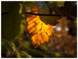 Golden October 2 by Vampirbiene