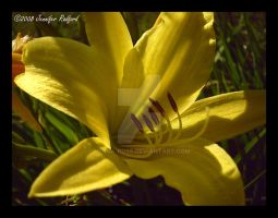 Dark Lemon Lily by Jenna-Rose
