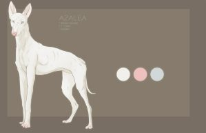 Azalea Reference by Fall-of-rain