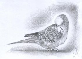 Parrot by Aiden2107
