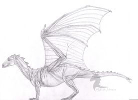 Anatomy of the Pernese Dragon by bronze-dragonrider