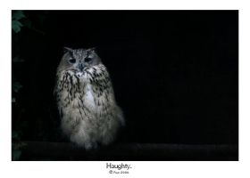 Haughty. by FSGPhotography