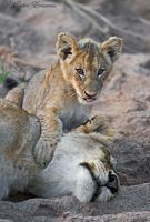 I've pinned my mom by MorkelErasmus