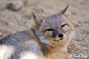 Sly grin by that-fox