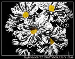 Black and White Flowers by DarkNightZ24