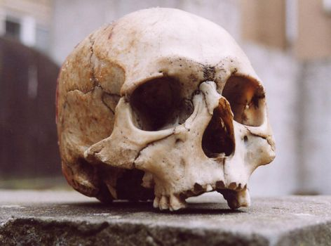 skull3-arsenal-greenfeed by arsenal-greenfeed