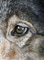 Wolf Eye ACEO II by Ferluner