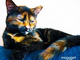teddy the cat 2 by MOGGGET