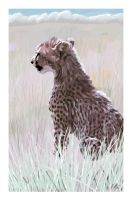 Young Cheetah by wildpaintings