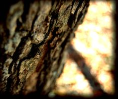 Bark Close up 1 by detihw
