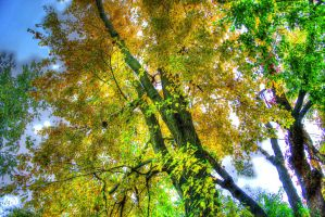 New Fall by toddcarter