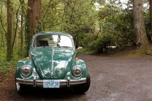 Green Bug by Marcusstratus