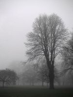The Past in the Mist by vespas