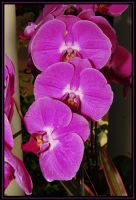 Passion Purple Orchids by TThealer56