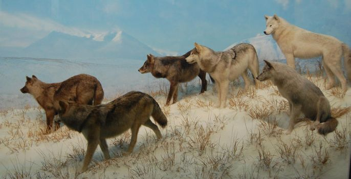 Wolf Pack Diorama by escapist1901
