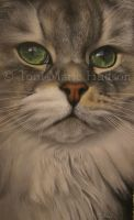 Cat portrait by Canis-Lupess
