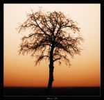 Abstract Tree. by sm00keh