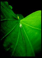 A Drop of Life by shuttermonkey