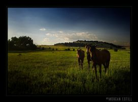 The Horses Who Ate My Family by Capt-Morgan