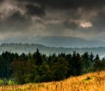 The chattering of trees in the wind by LordLJCornellPhotos