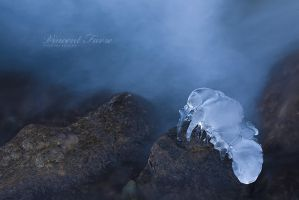 Ice crawfish... by vincentfavre