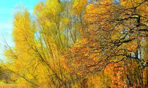 Shades of Autumn 2015, 8 by MadGardens