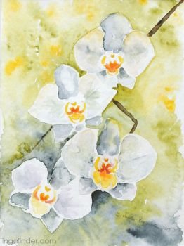 Orchids - watercolor by IngaLinder