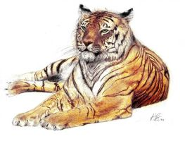 Panthera Tigris by therealarien