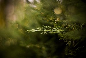 Pine tree 1 by svenolgson22