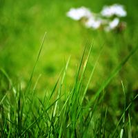 Green grass by LeaLion