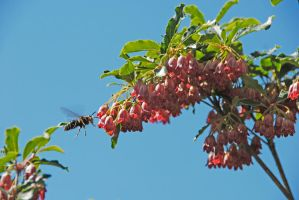 Wasp Landing on Tree by MogieG123