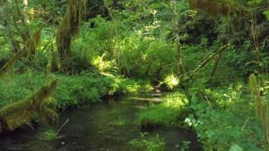 Streams of Green by Speck2