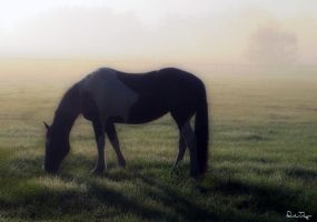 Sugar In The Mist by Deirdre-T