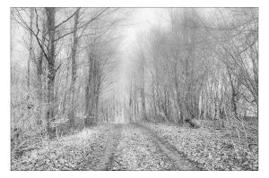 A January Walk by AndersStangl