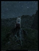 The Nightwatchman - Fox Detail by Foxfires
