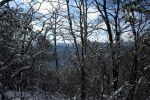 Snowy Thicket by CORSA180