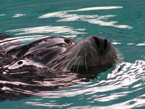 Seal by Squirry