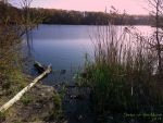 Walking at Manasquan Reservoir by Sister-of-the-Moon