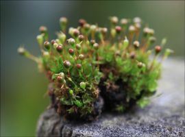 A Touch Of Moss 2. by Firey-Sunset