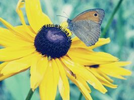 Yellow flower and butterfly by satanistuke