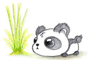 Baby Panda Bear by IL-JA