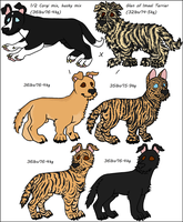 Scruffy Mixed Breeds by Leonca