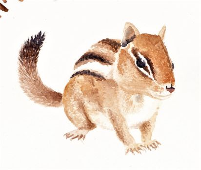 Watercolour squirrel by Dontknowwhattodraw94