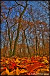 Autumn's contrast by Reiep