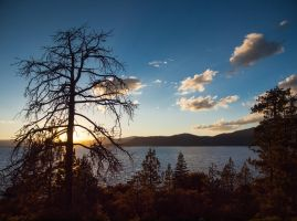Dead Tree Sunset by MartinGollery